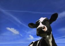 What Milk is Kosher?