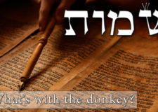 Parashat Shemot – What's with the donkey?
