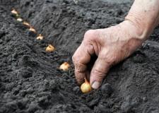 Planting Smart