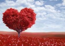 Don't Sacrifice Your Heart – Parashat Tetzaveh
