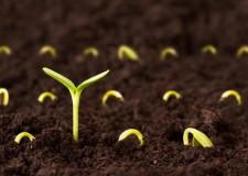 Seeds of Rebirth