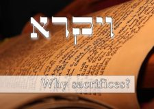 Parashat Vayikra – What is the sacrifice in my life?