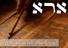 Parashat Vaeira – What's with the frogs…?